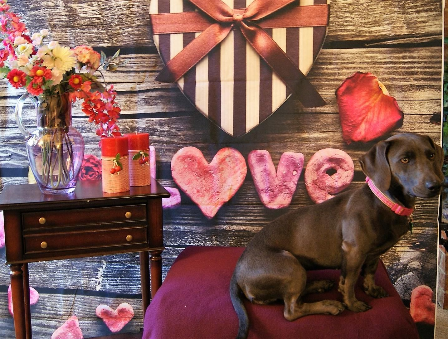 Adopt Willow on Dachshund mix, Puppies, Rescue dogs
