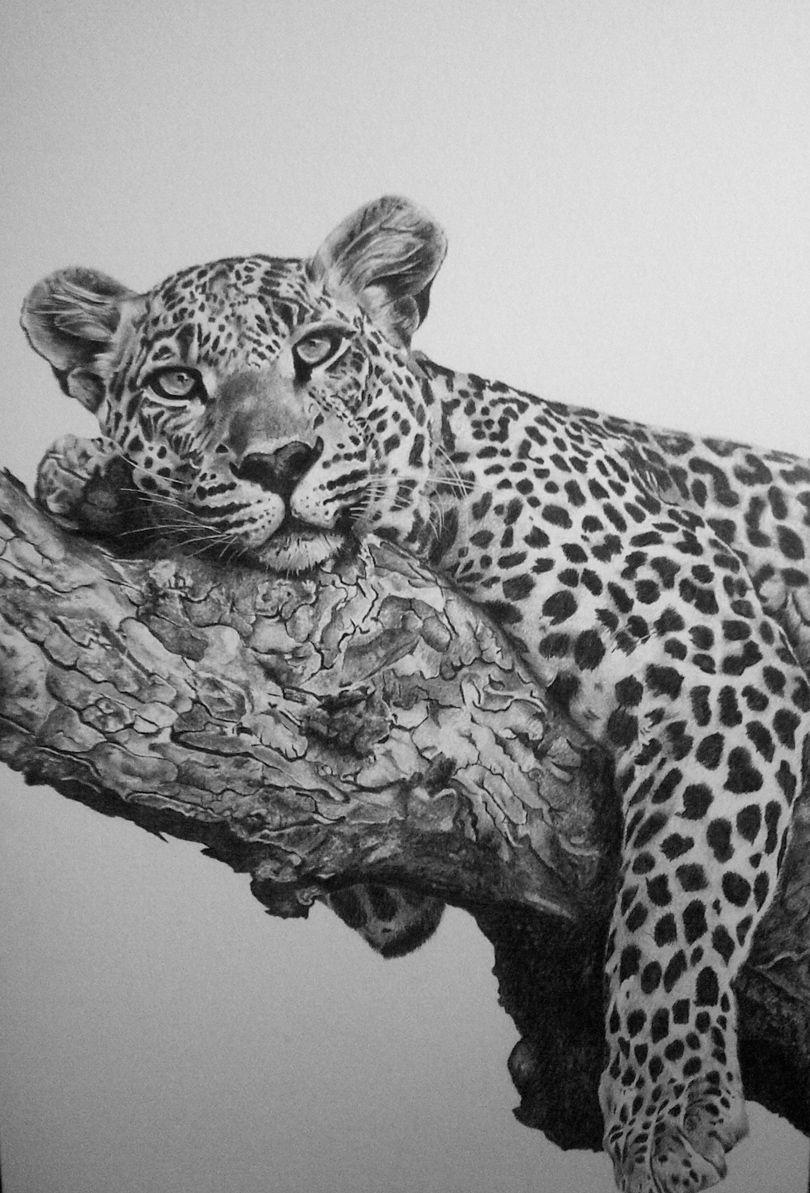 Leopard In Pencil Board. Warren Cary Wildlife
