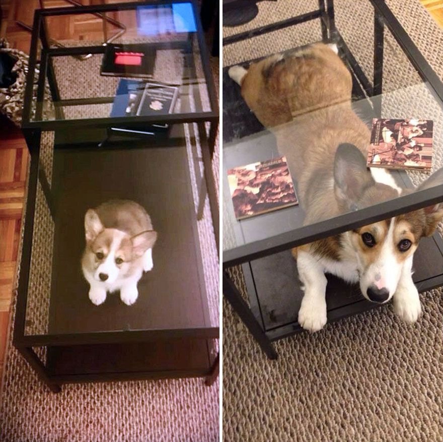 Growing Up: 21 Adorable Before And After Dog Photos