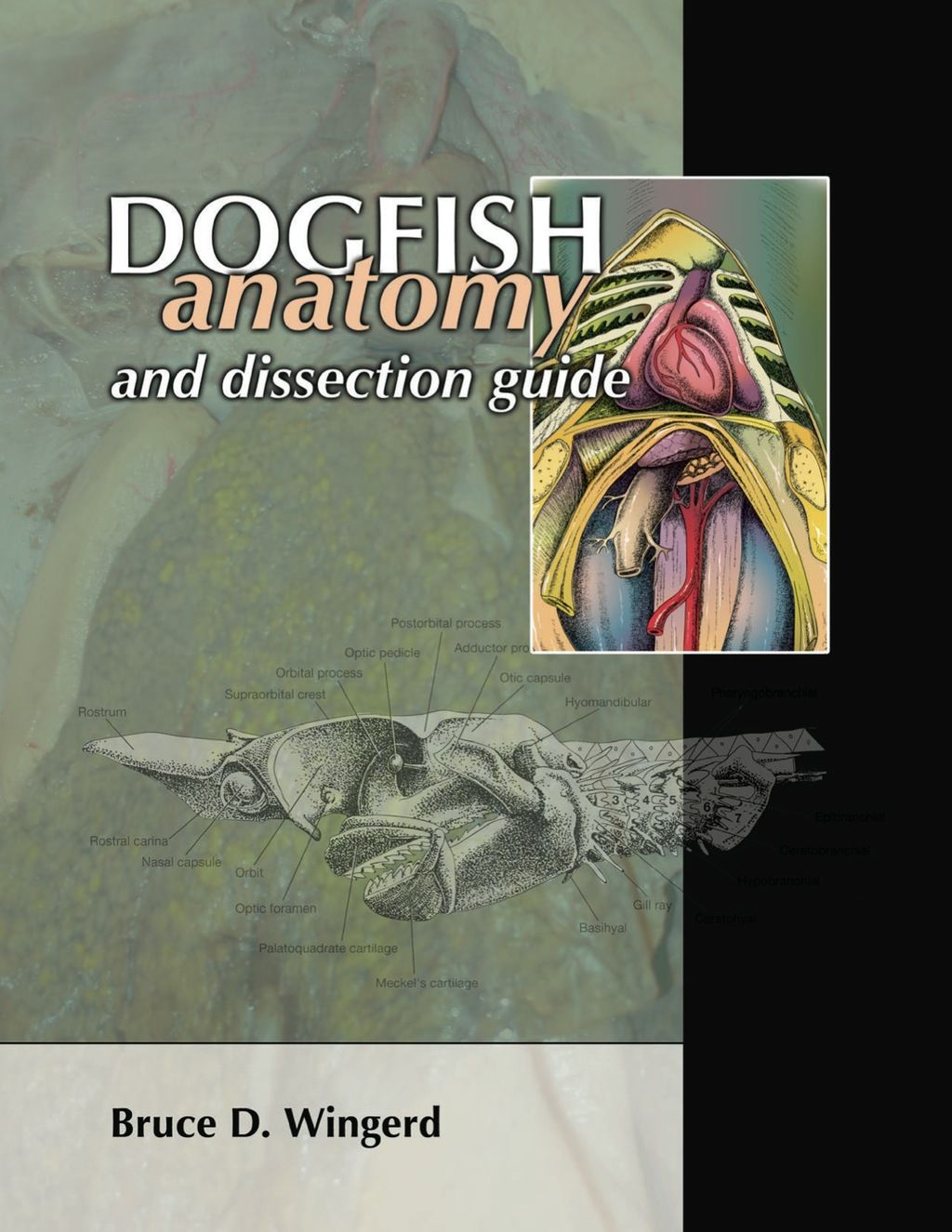 Dogfish Anatomy And Dissection Guide Ebook In