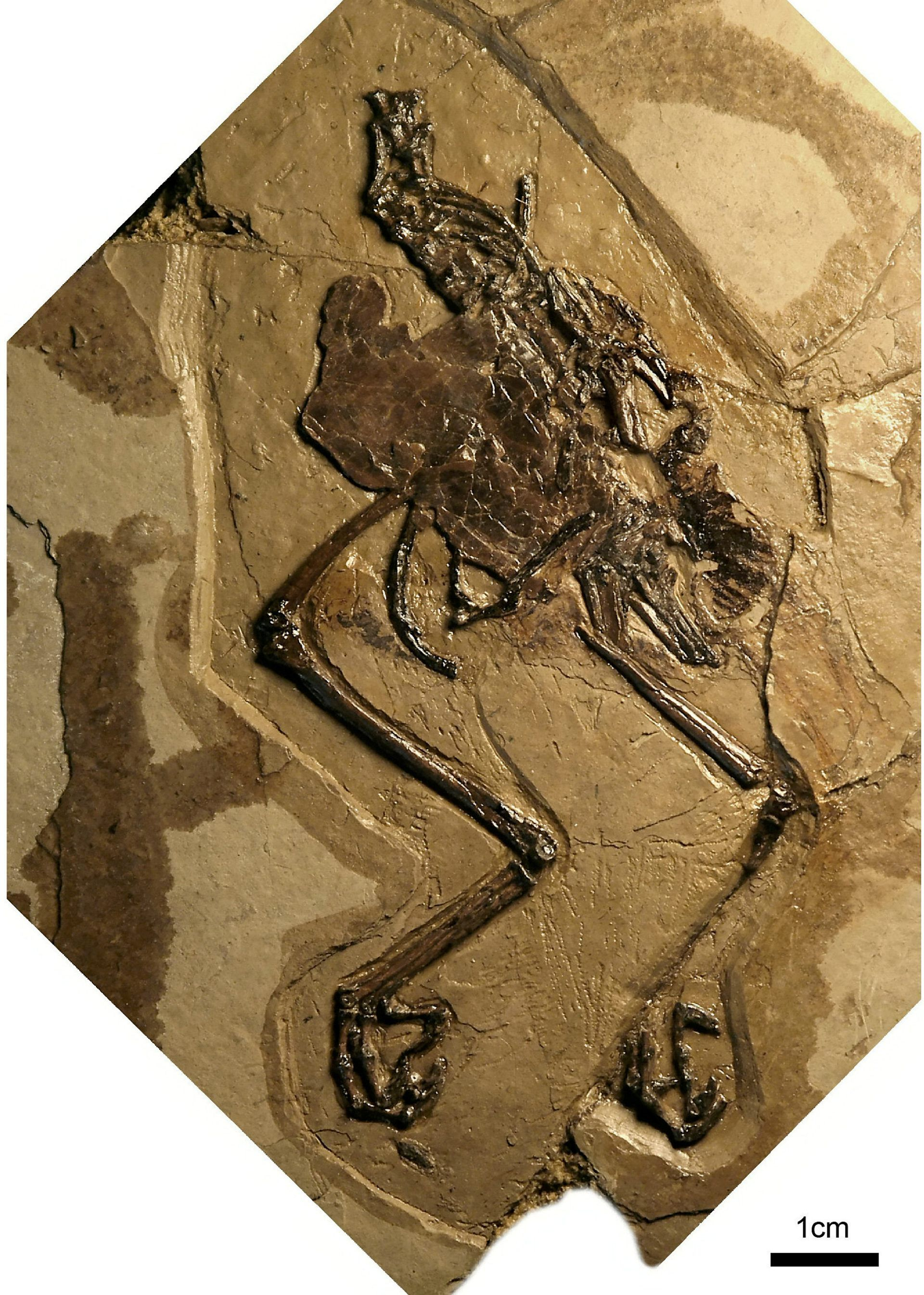 110 Million Year Old Bird Fossil Found With Egg Inside Fossil Ancient Dinosaur Era