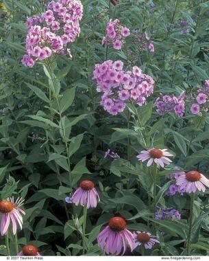 http://www.finegardening.com/plant-combinations-work