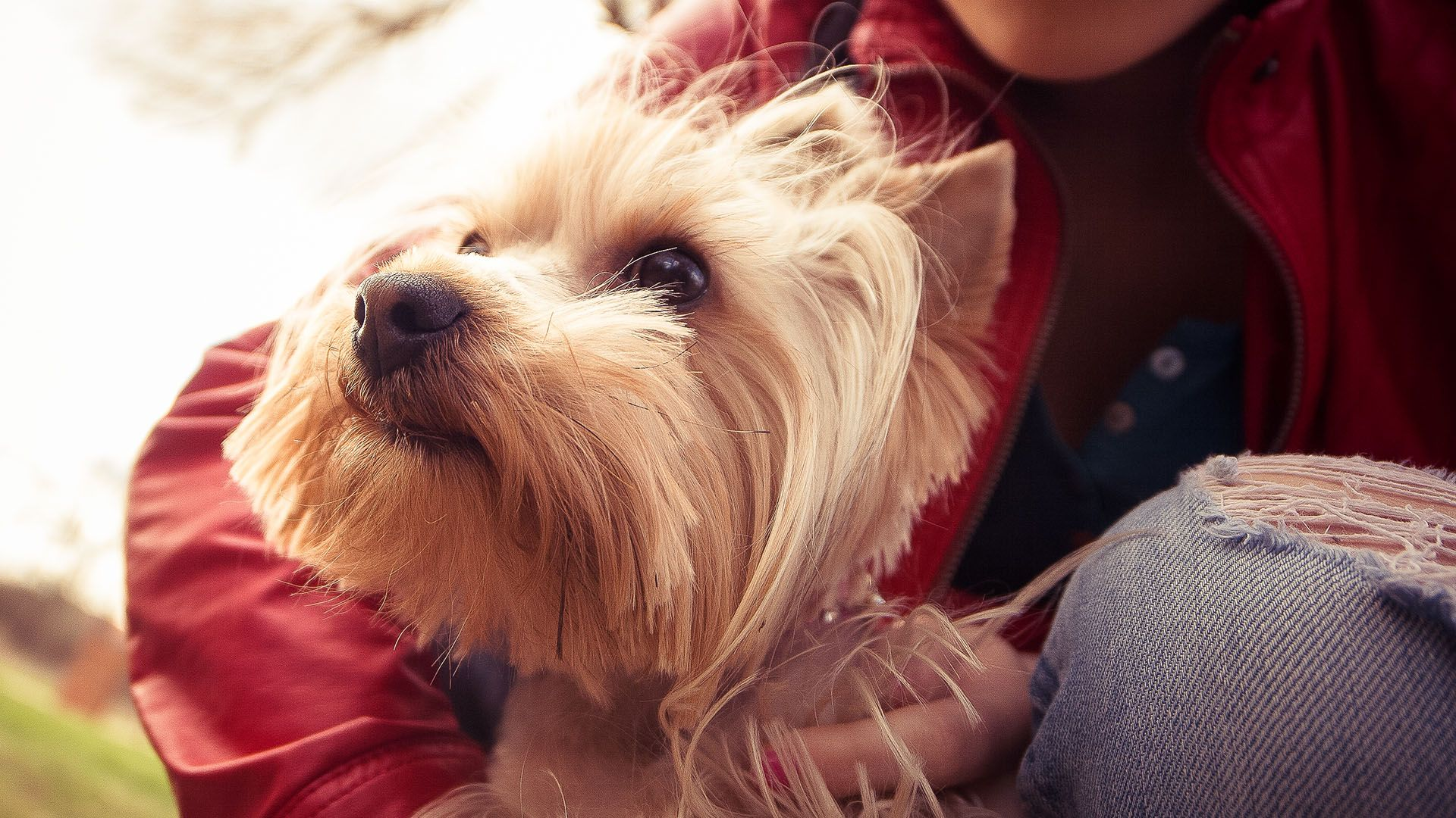How your dog saving money  yorkie-love-funktionen