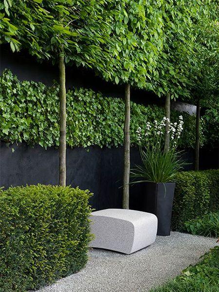 Grow A Living Privacy Screen Pea Gravel Garden Gravel Garden Modern Landscaping