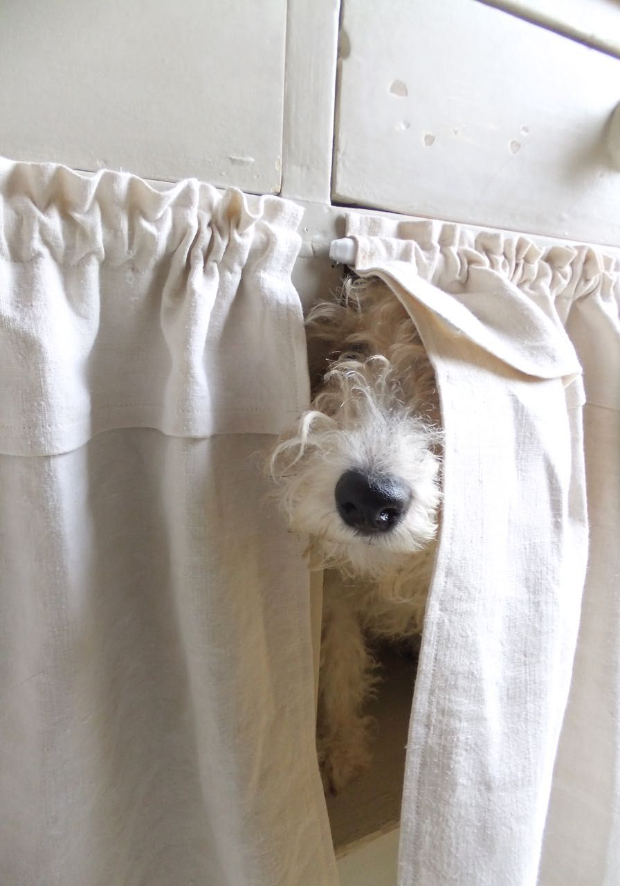 Fox Terrier Potter, Naughty Adorable