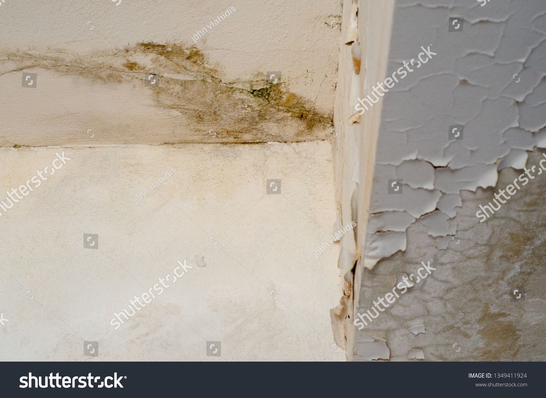 Pin On Fungus Mold Wall Damage