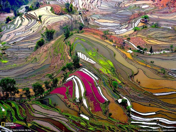 Bird Eyes View Colorful Rice Field Photos Beautiful