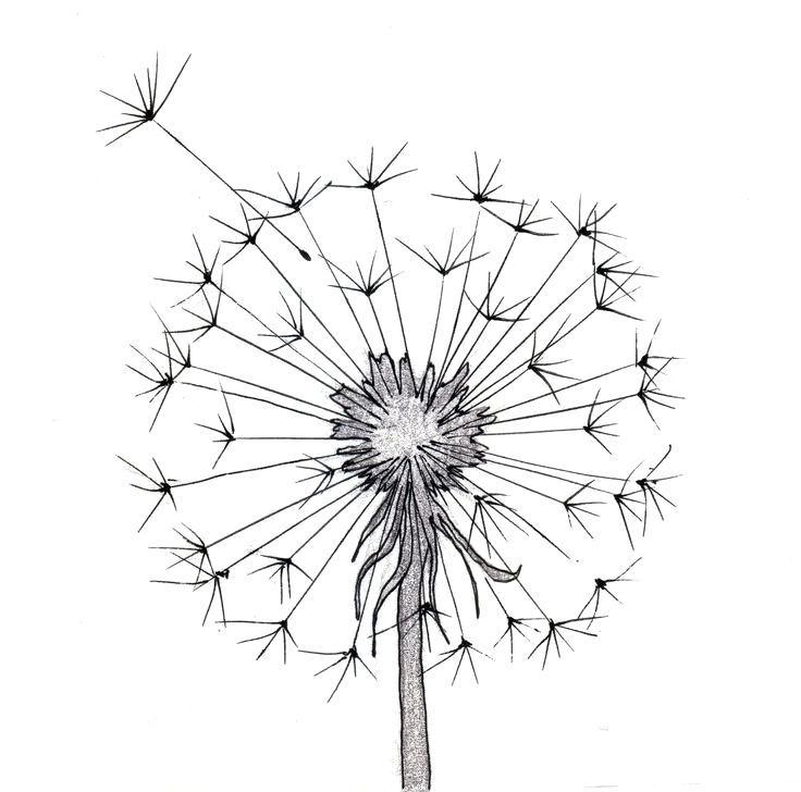 Easy Flower To Draw Easy Flower Drawings Steps Cute Flower Drawing Simple Flower Drawing Easy Flower Drawings