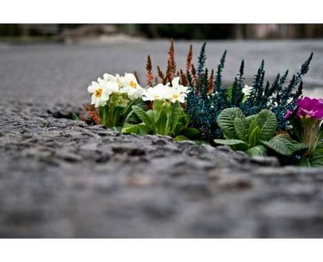 guerilla asphalt gardens - Pete Dungey fills up potholes with flowers