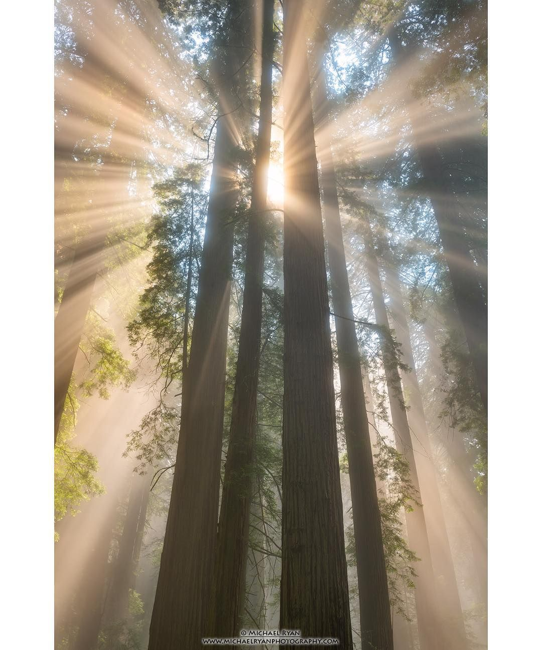 Light Burst • A Little Afternoon Lighteousness Facing West