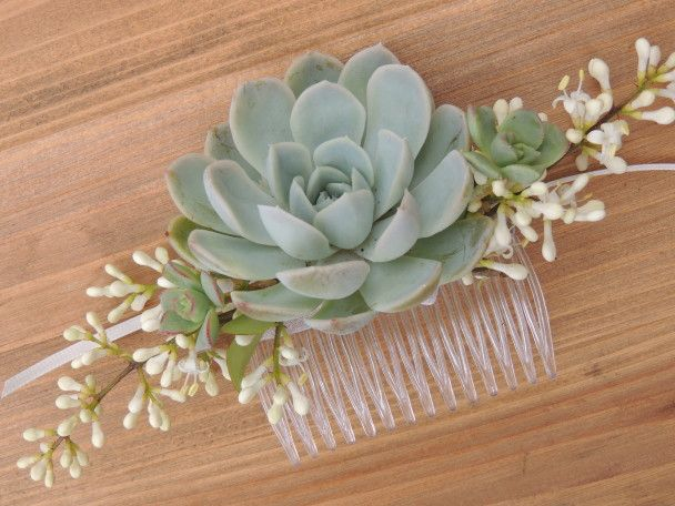 Medium size succulent comb.The comb measures 3.25' across and the succulent is approximately 1.75' diameter.