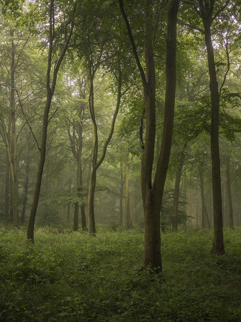 Wendover Woods, Buckinghamshire, England by Damian_Ward