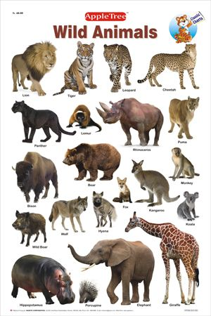 Chart And To Tamil Wild Animals Pets Click Name Polar Animal California Glance Deer U The Over Their Of Through Daily Wildlife Find Species