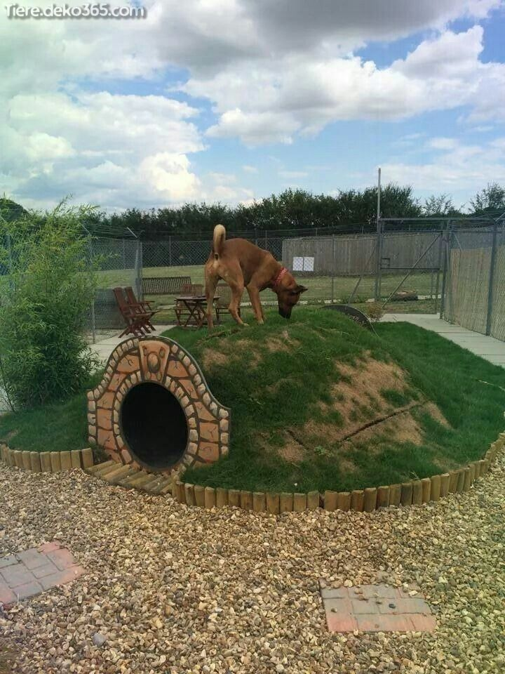 Photo of Exceptional garden ideas that delight your dog