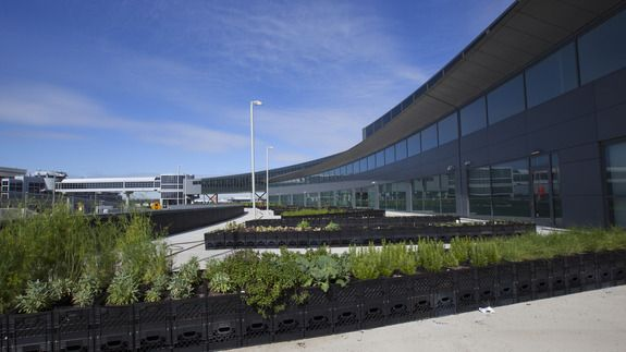 JetBlue opens the first airport potato farm at New York's JFK