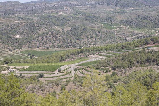 Spanish Wine Country Boundless Forests Stretching Past