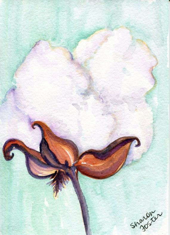 Cotton Boll Watercolors Paintings Original By