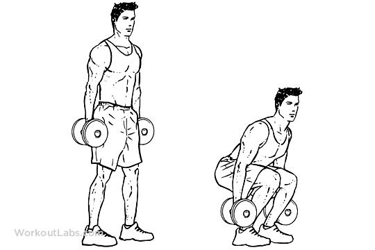 Упражнения для ног с гантелями в картинках