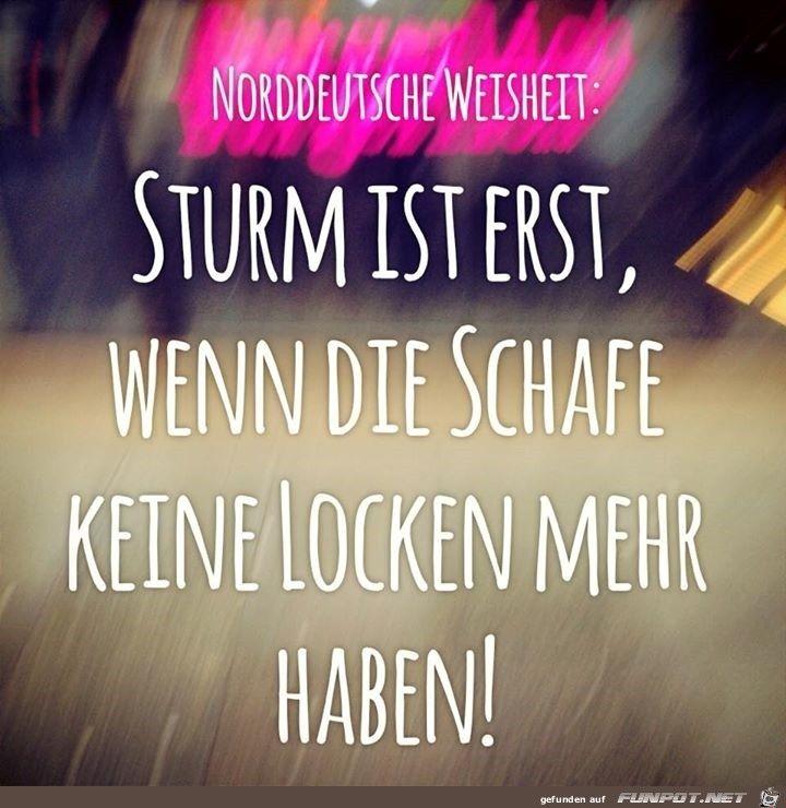 Funpot Sturm Jpg Von Renilinz Funny Words Jokes Quotes Funny Quotes