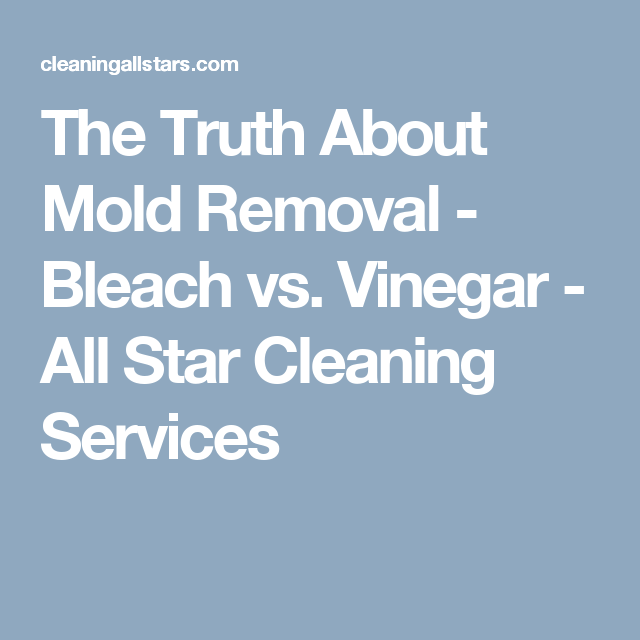 The Truth About Mold Removal Bleach Vs Vinegar All Star Cleaning Services