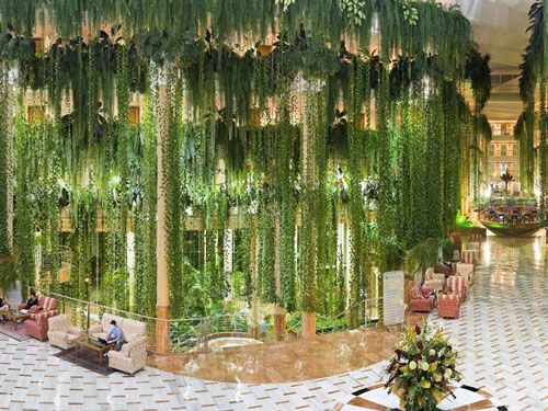 Be Live Playa La Arena Hotel Lobby Hotel Plants Green Architecture Hanging Plants
