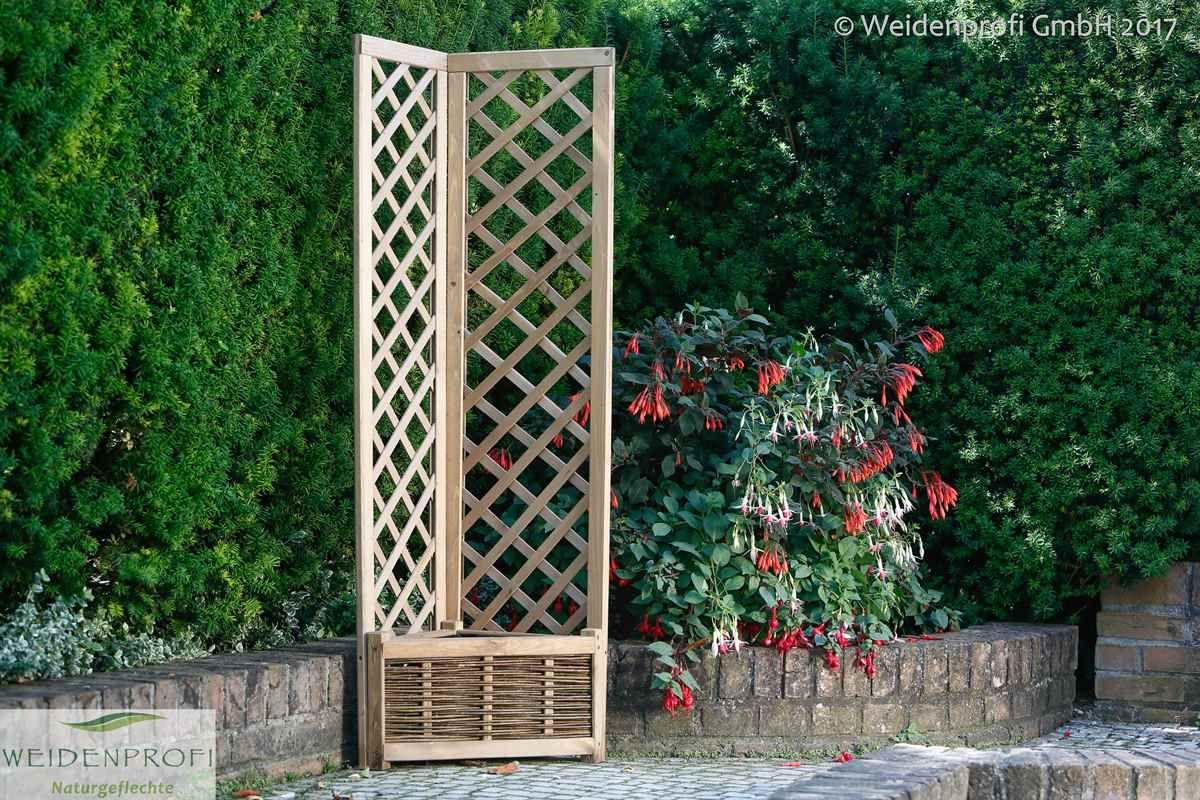 Die Pergolagitter bieten rankenden Pflanzen sicheren Halt und