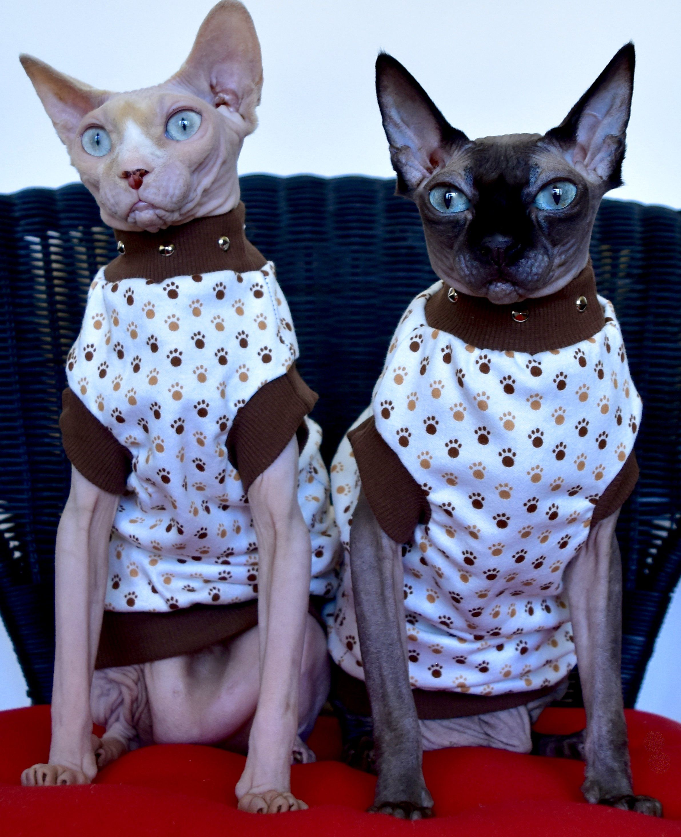 Punk Paws Cute Hairless Cat Cat Obsession Sphynx Cat