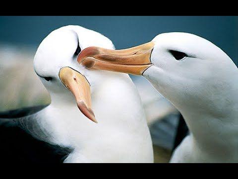 Fleetwood Mac - Albatross (Cover by DOC & Francesco)