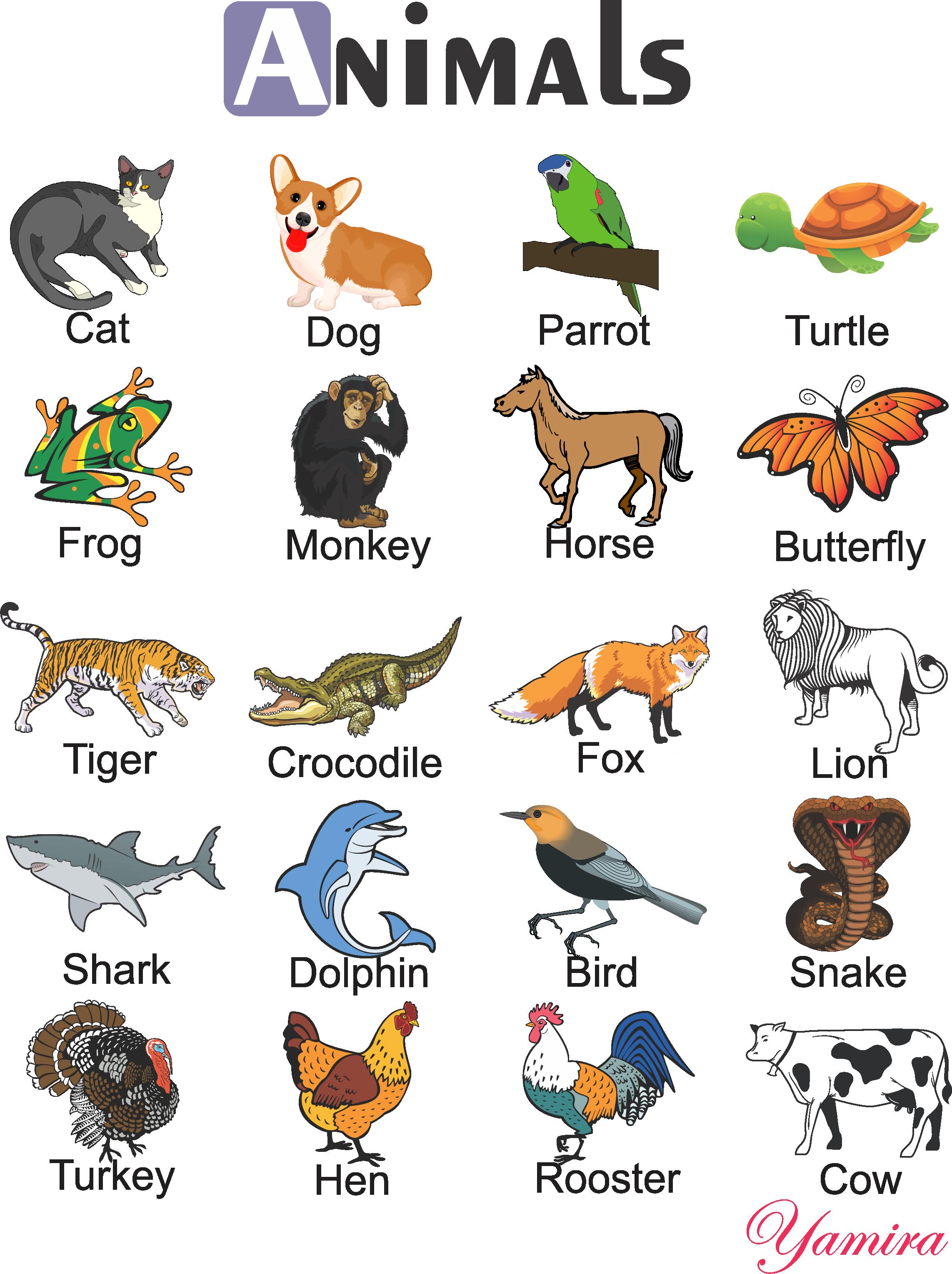 Картинки животных с названием по английски