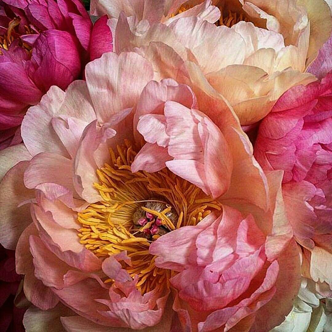 Pin by kate on pinterest explore real flowers pretty flowers and more mightylinksfo