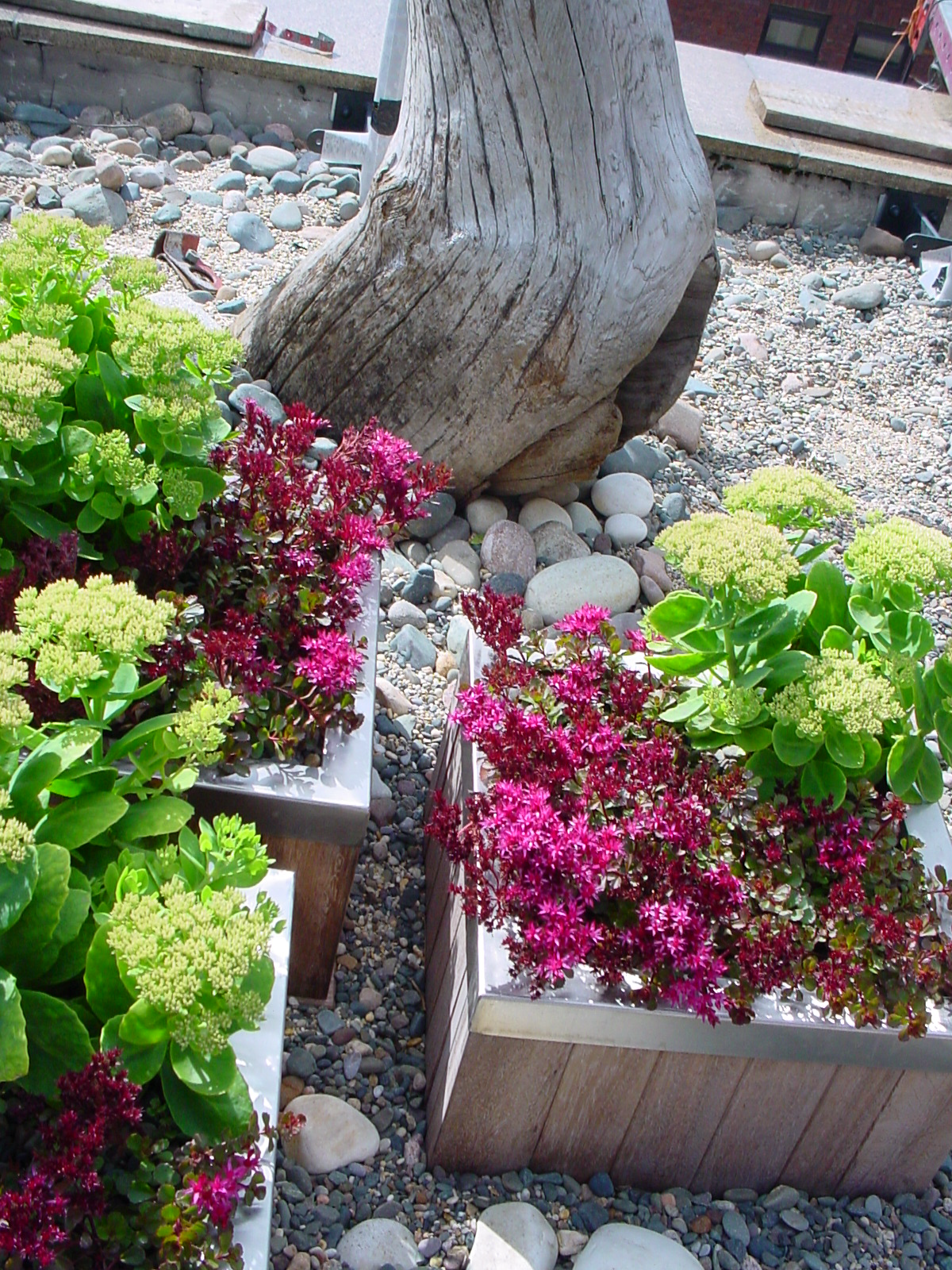 """Gardens By Maria: Roof Terrace Planting """" Dry River Bed & Wild Flower Theme"""