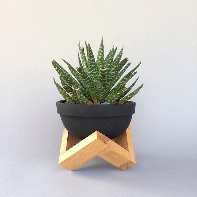 pequeño maguey en maceta de barro y base en madera, ideal para