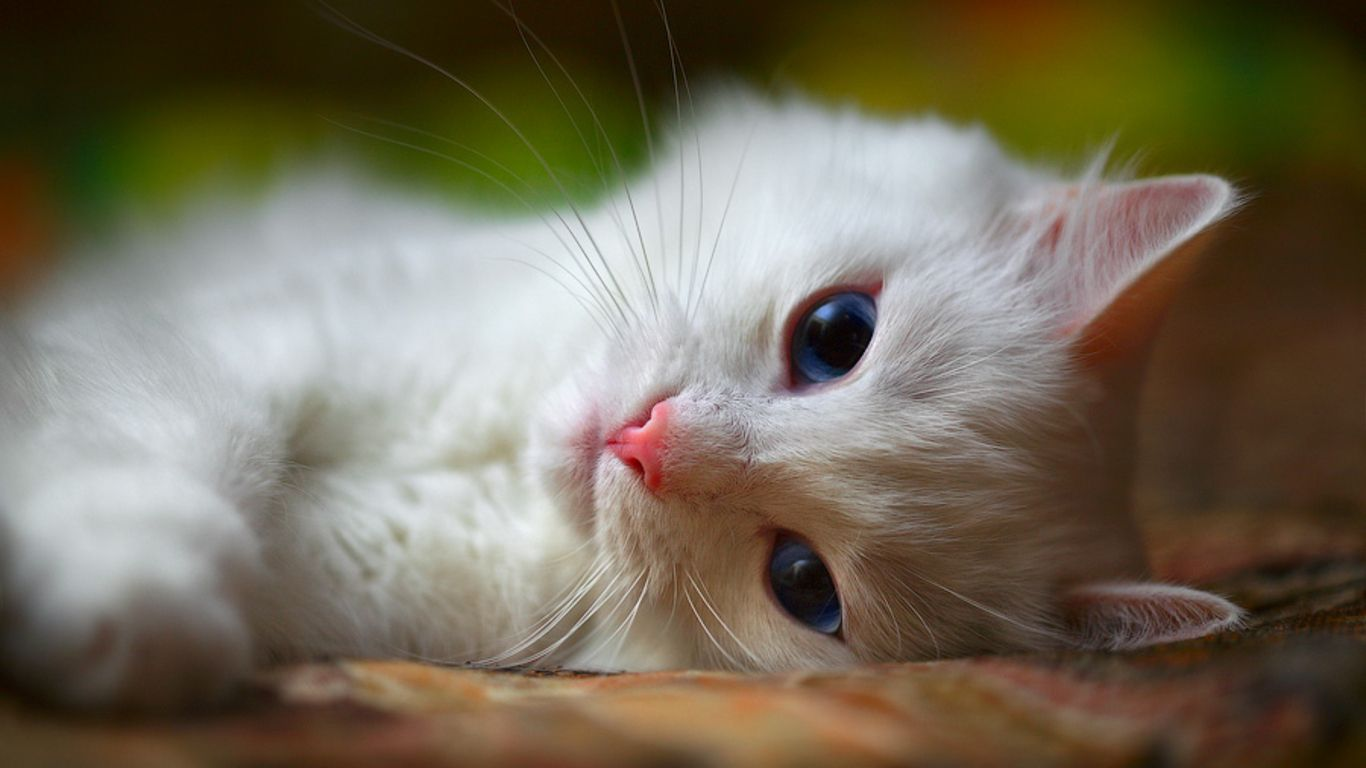 Cat Pictures Free Cat Wallpaper Download 01 Free 3d