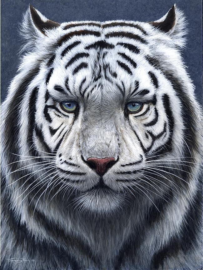 White Tiger Ghost Toucanvas Tiger Pictures White Tiger Tiger Artwork