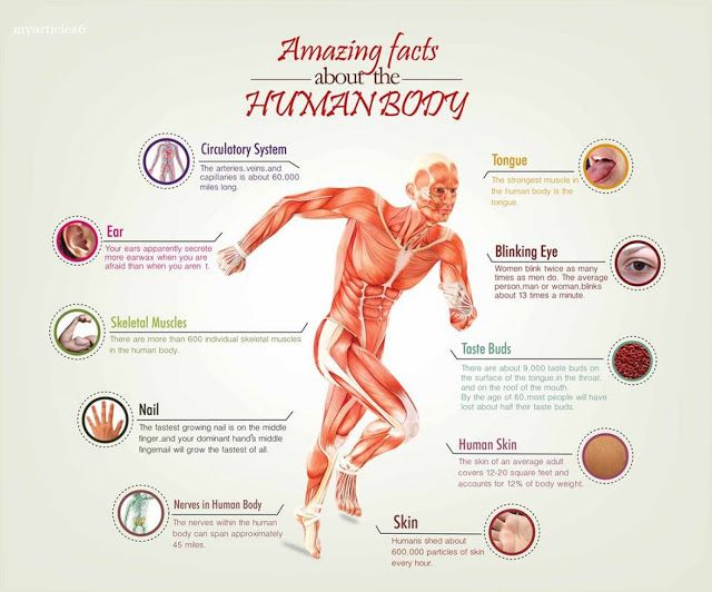 Interesting Facts about Human Body - My Articles | Informative ...