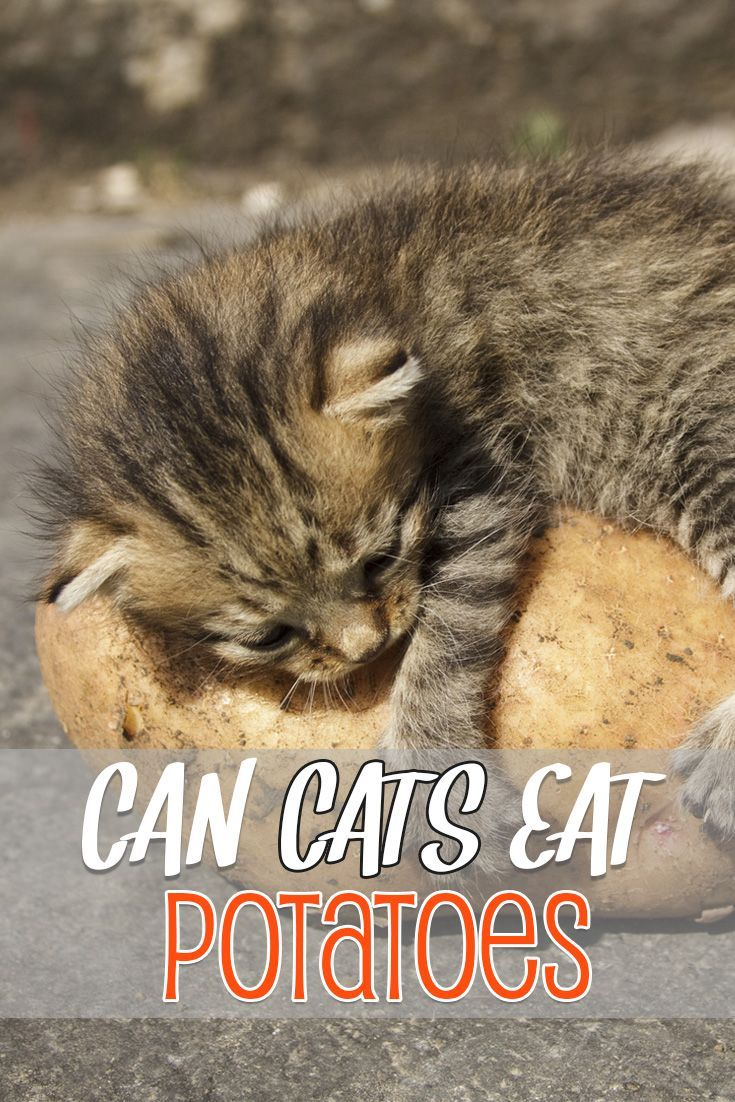 Can cats eat potatoes? Should they eat sweet potatoes or