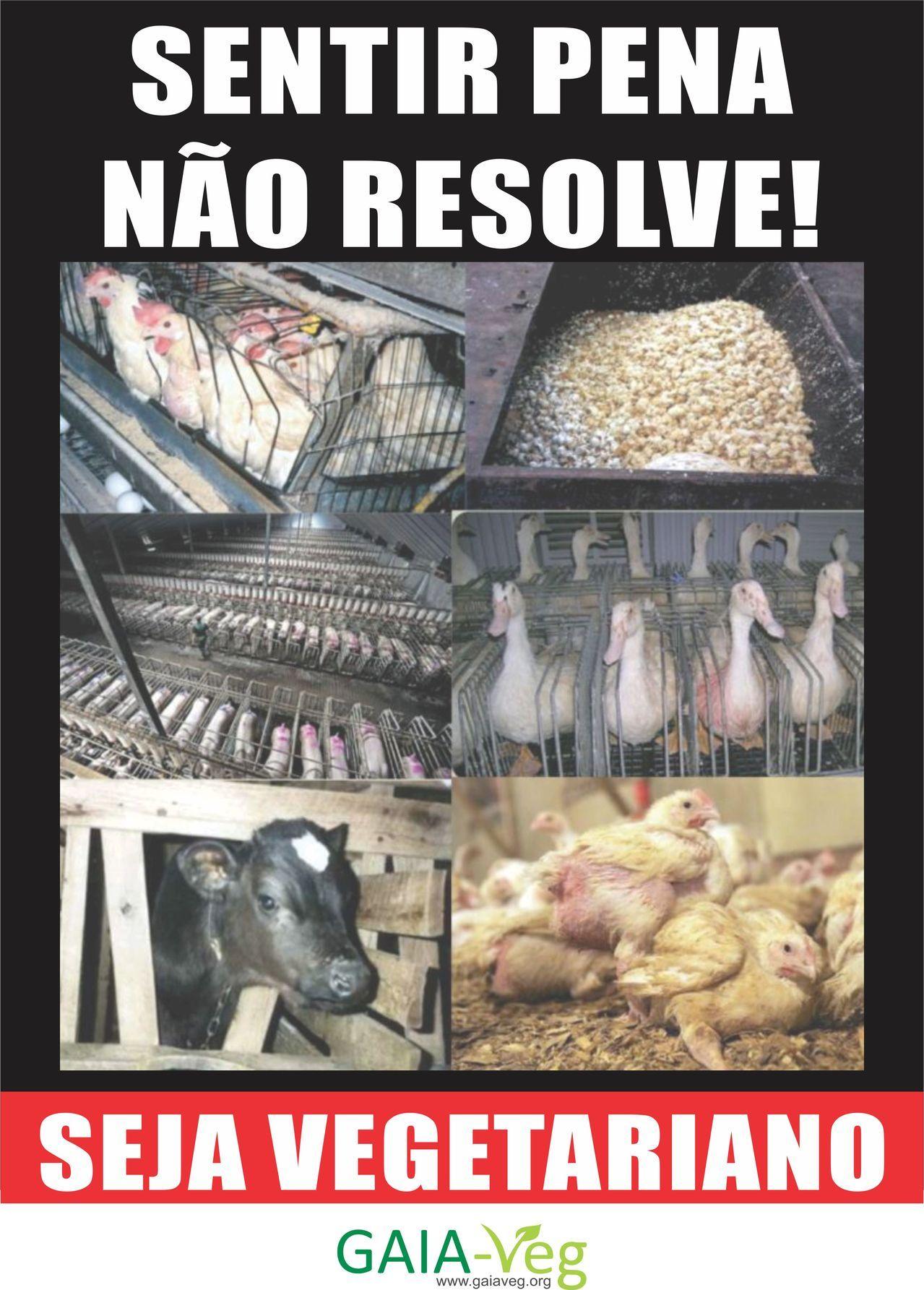Sentir pena não resolve! Seja vegetariano
