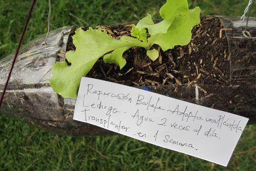 Adopt A Seedling Bogota Colombia Garten