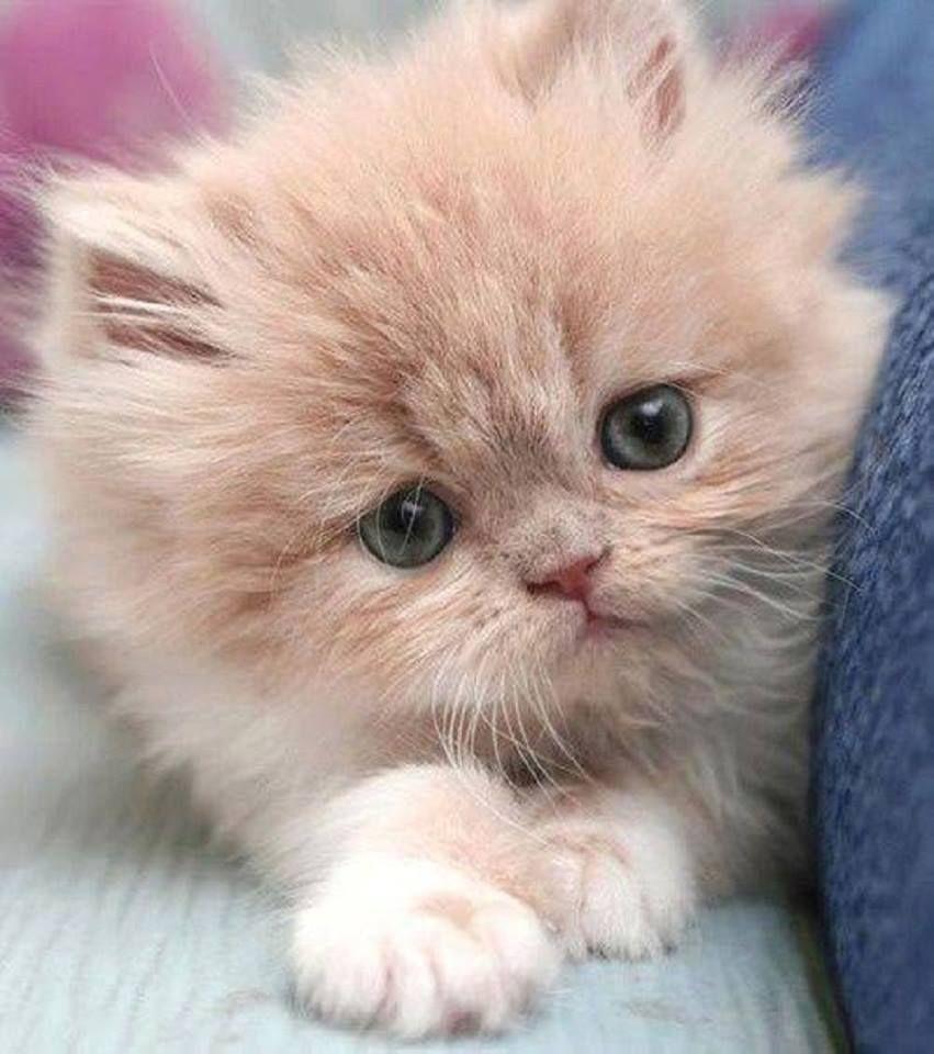 Pin by kim straus on kitties pinterest dog and animal