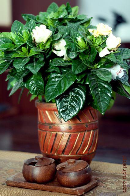 Http Www Vegetable Garden Guide Com Container Vegetable Gardening