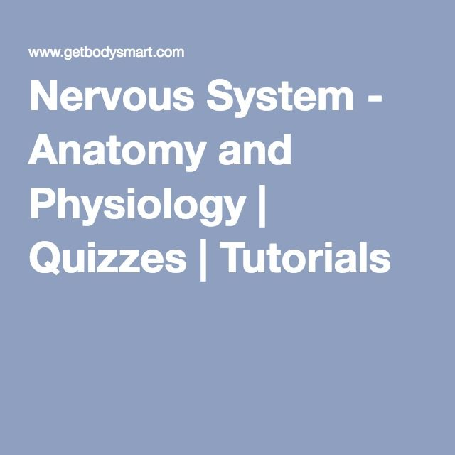 Nervous System - Anatomy and Physiology | Quizzes | Tutorials ...
