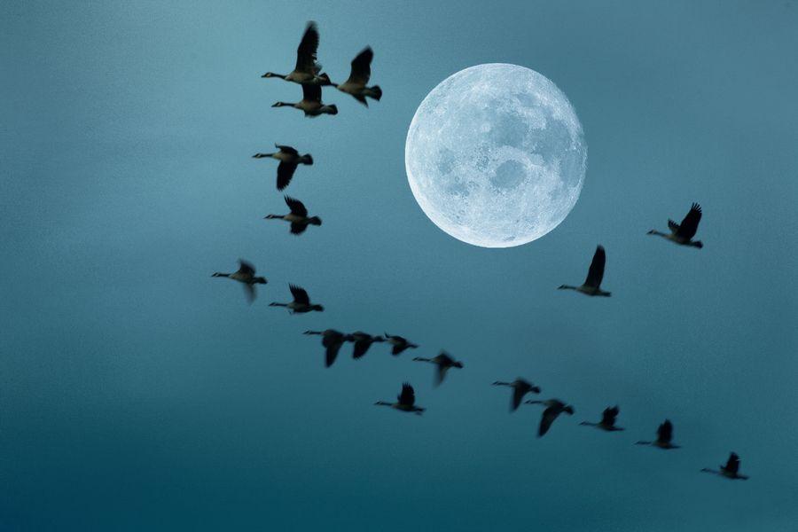 Fly Far away by AtaAlishahi