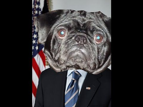 Crazy Funny Pug Playing Youtube The Next President Will Pug You