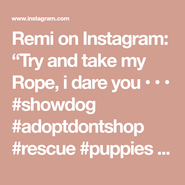 """Remi on Instagram: """"Try and take my Rope, i dare you • • • #showdog #adoptdontshop #rescue #puppies #doglove #mydogiscutest #gsdofig #animalsinfluence…"""""""
