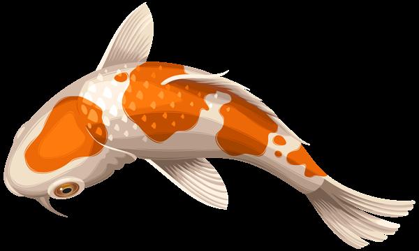 White And Orange Koi Fish Transparent Clip Art Png Image