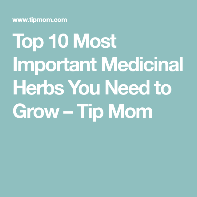 Top 10 Most Important Medicinal Herbs You Need to Grow – Tip Mom