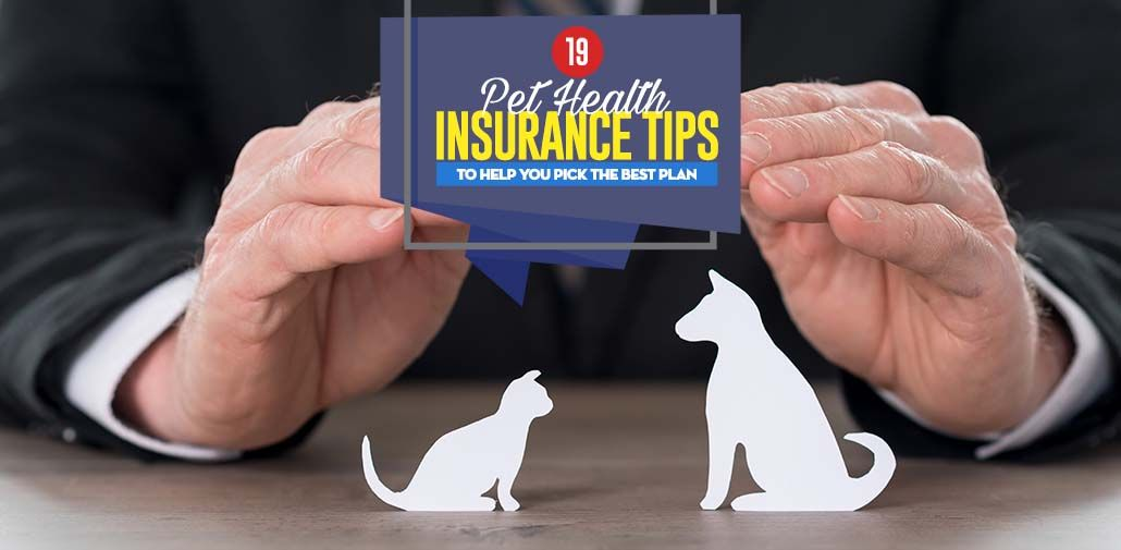 Since 2009, the number of pet health insurance companies