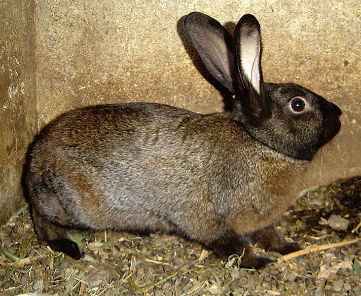 Tips on Keeping Pet Rabbits Outdoors in Cold Weather: Winter Outside Rabbit Care How to Keep Water Bottles From Freezing