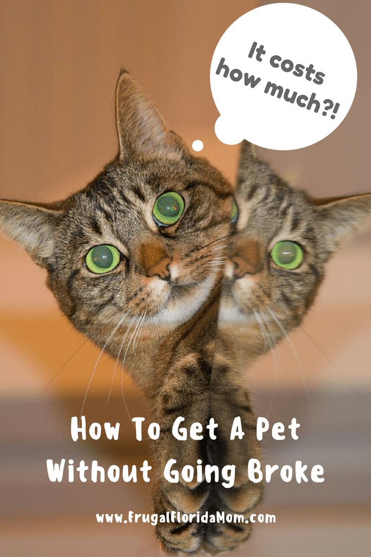 Get A New Pet Without Going Broke Saving On Pet Supplies Pets Pet Supplies Life On A Budget