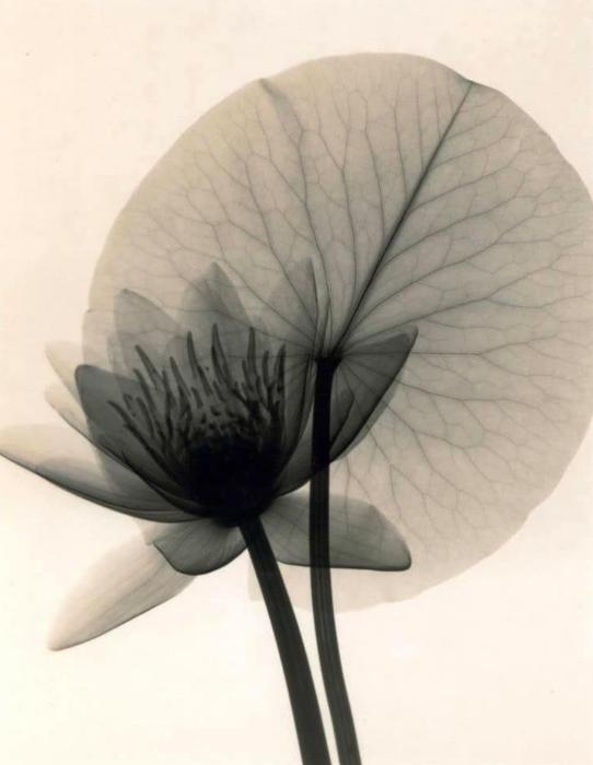 Pin Von Selma Spahic Auf Bodydecoration Seerose Bilder